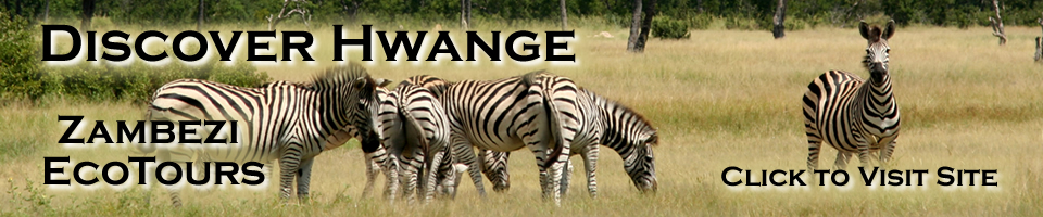 Discover Hwange with Zambezi Eco-Tours